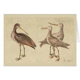 Shore Birds Card