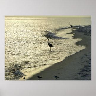 Shore Birds Poster