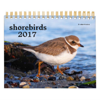 Shorebirds 2017 wall calendars