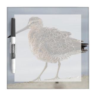 Short-billed Dowitcher Dry Erase Whiteboard