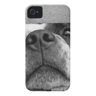 Short Coated Dog Between Wooden Boards Case-Mate iPhone 4 Case