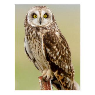 Short Eared Owl At Ninepipe Wma Near Ronan Postcard