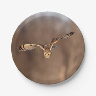 Short-eared owl diving towards the ground paper plate