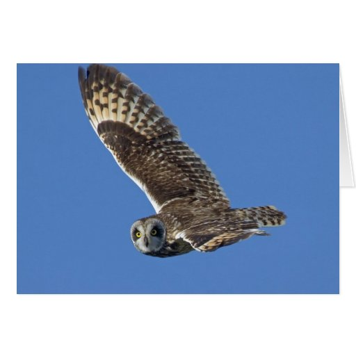 Short-eared Owl in Flight Greeting Cards