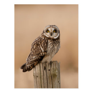 Short eared owl post card