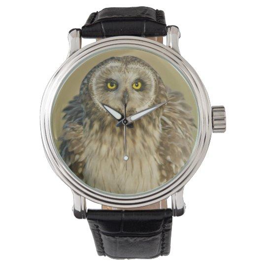 Short-eared Owl Watch