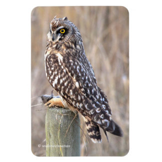 Short-Eared Owl with Vole Magnet