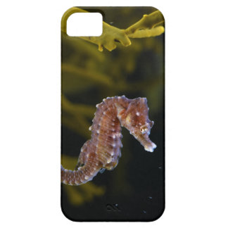 Short-snouted Seahorse Hippocampus hippocampus iPhone 5 Cases