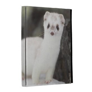 Short-tailed weasel hunting for voles iPad folio cases