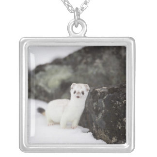 Short-tailed weasel hunting for voles silver plated necklace