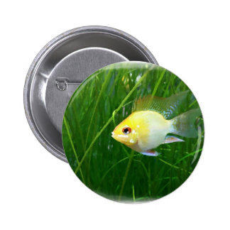 shortbodygoldenram_art1 2 inch round button