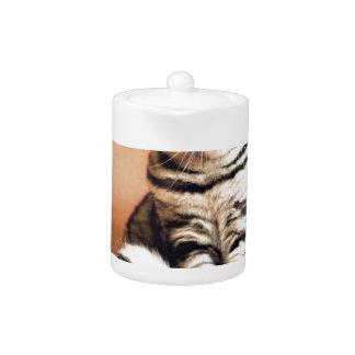Shotlanskogo Fold Cat Kitten Pets British Cat