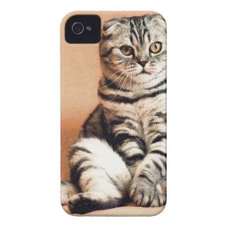 Shotlanskogo Fold Cat Kitten Pets British Cat iPhone 4 Case