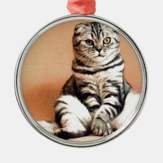 Shotlanskogo Fold Cat Kitten Pets British Cat Metal Ornament