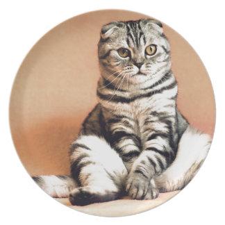 Shotlanskogo Fold Cat Kitten Pets British Cat Plate
