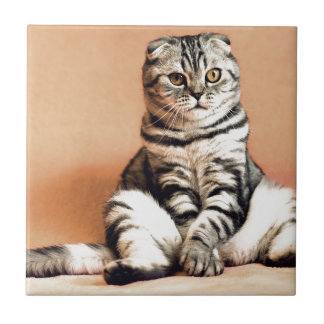 Shotlanskogo Fold Cat Kitten Pets British Cat Tile