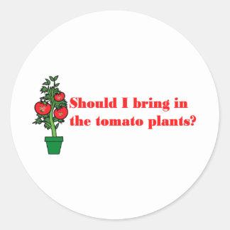 Should I bring in the tomato plants? Classic Round Sticker
