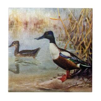 Shoveler Ducks Vintage Illustration Tile