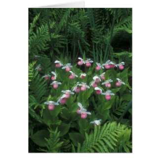 Showy Lady's Slippers in Ferns Card
