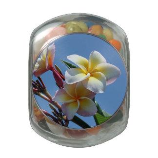 Showy Plumeria Frangipani Blooms