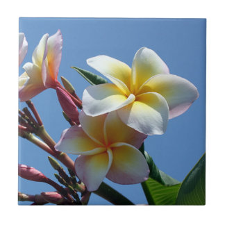 Showy Plumeria Frangipani Blooms Tile