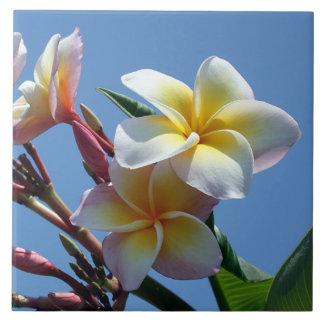 Showy Plumeria Frangipani Blooms Tiles