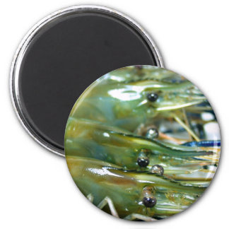 shrimp 2 inch round magnet