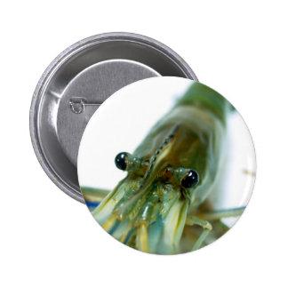 shrimp buttons