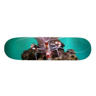 Shrimp Climbing An Anemone Skate Boards