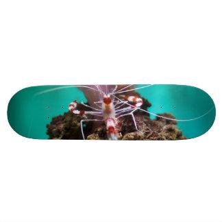 Shrimp Climbing An Anemone Skate Deck