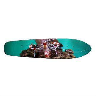 Shrimp Climbing An Anemone Skate Decks