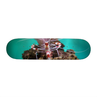 Shrimp Climbing An Anemone Skateboard Decks
