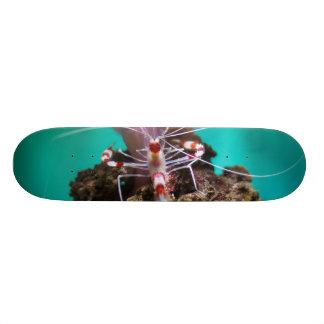 Shrimp Climbing An Anemone Skateboard