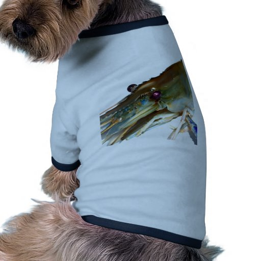 shrimp pet t shirt