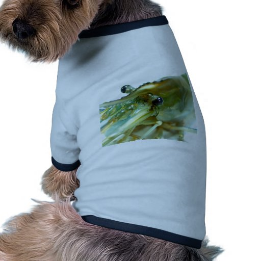 shrimp doggie tee