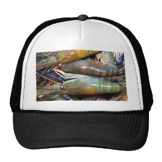 shrimp hats