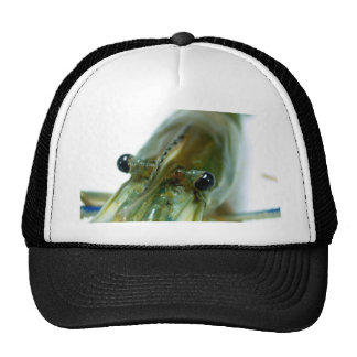 shrimp mesh hats