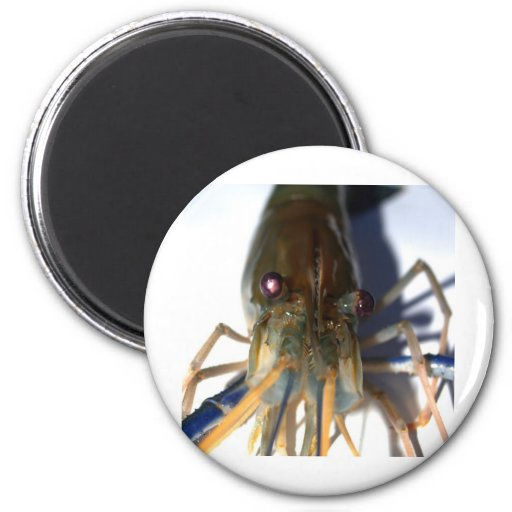 shrimp refrigerator magnets