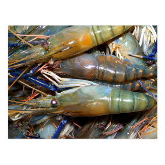 shrimp postcard
