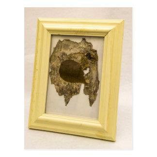 SHUSH Museum Exhibit 13: Extinct Lichen Specimen Postcard