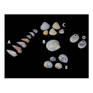 SHUSH Museum Exhibit 20: Dead Sea Seashells Postcard