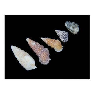 SHUSH Museum Exhibit 21: Dead Sea Seashells Postcard