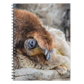 Shy Bear Notebook