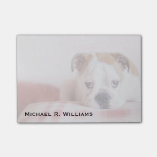 Shy English Bulldog Puppy Post-it Notes