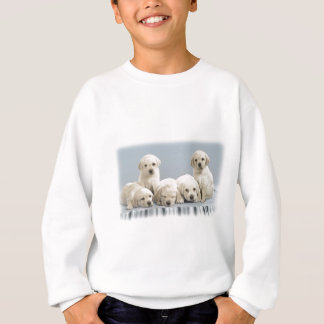 Shy Golden Retriever Puppies Sweatshirt
