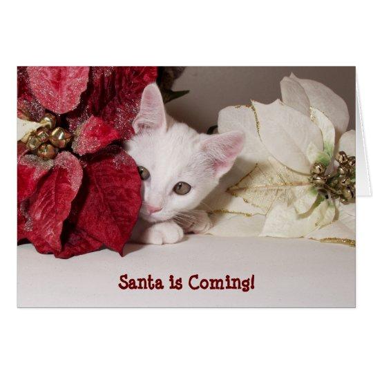 Shy Kitten Poinsettia Christmas Card