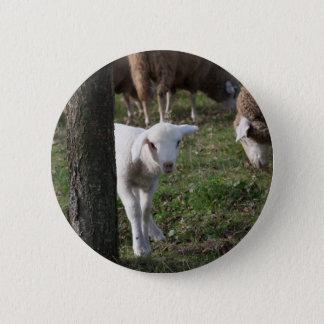 Shy lamb 2 inch round button