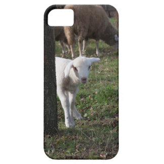 Shy lamb case for the iPhone 5
