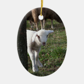 Shy lamb ceramic ornament