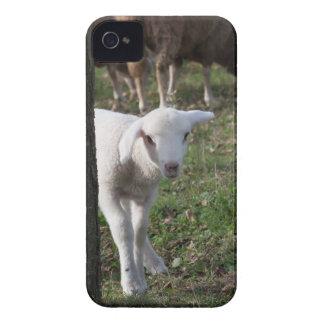 Shy lamb iPhone 4 case